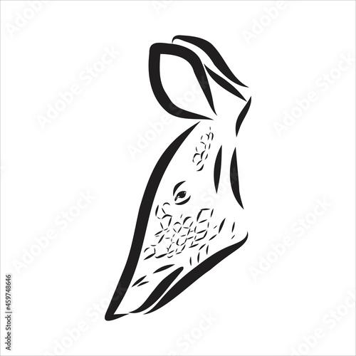 Armadillo parrot polygonal lines illustration Fototapet