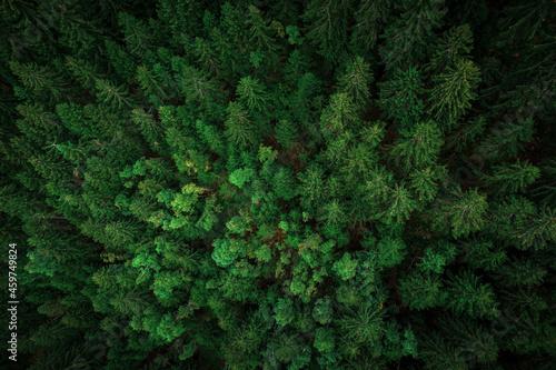 Billede på lærred Wald von oben