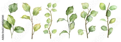 Billede på lærred Set of hand painted watercolor botany isolated on white background