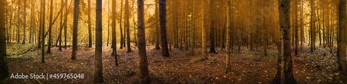 Valokuva Paranormal stranger autumn forest for horror web banner background