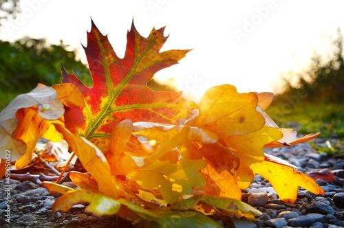 Kolorowe liście jesienne