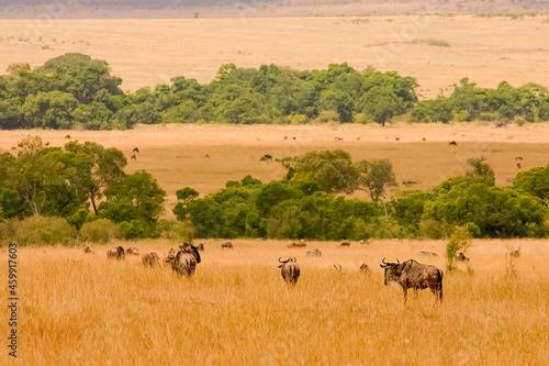 Photo Paysage de plaine et arbres Afrique Kenya