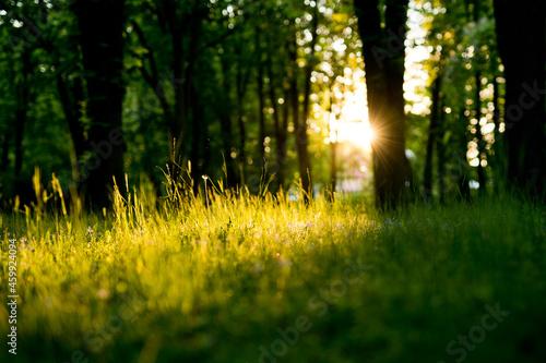 Zachód słońca w parku