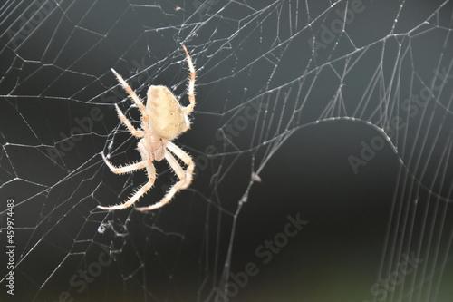 Slika na platnu araignée