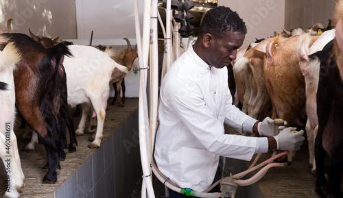 Fotografiet African American male breeder preparing for machine milking of goats on farm