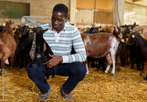 Canvas Print Portrait of African-American man successful breeder with goatlings on goat farm