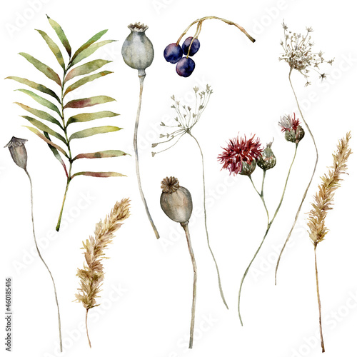 Obraz na plátně Watercolor autumn set of dry pampas grass, poppy, anise, thistle, berry and leaves