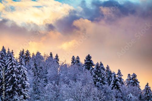 Fotografie, Obraz Forêt et ciel