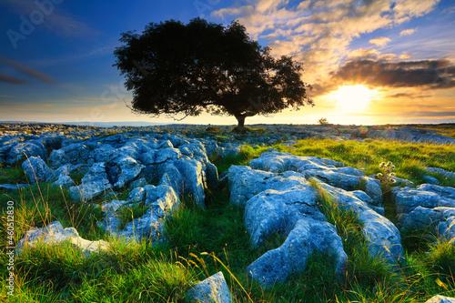 Fototapeta Lone Tree growing in Limestone pavement at Sunset, Twisleton Scar, Ingleton, Yorkshire Dales, England, UK