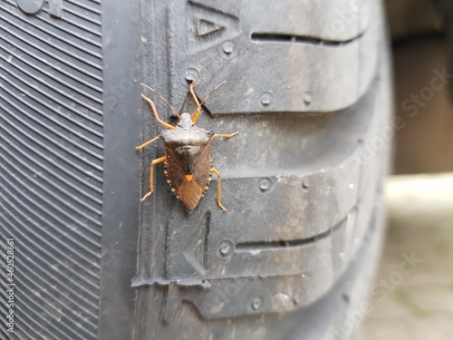 Canvas green stink bug on rubber tire
