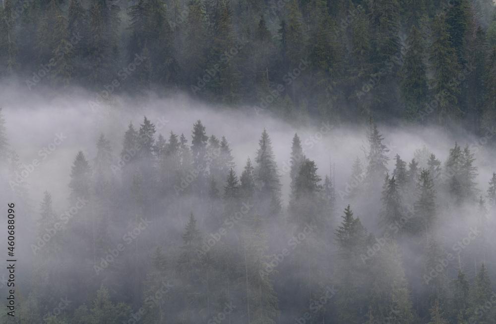 Mglisty poranek w lesie w salonie