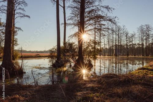 Fototapeta Beautiful shot of Southern Georgia marshland