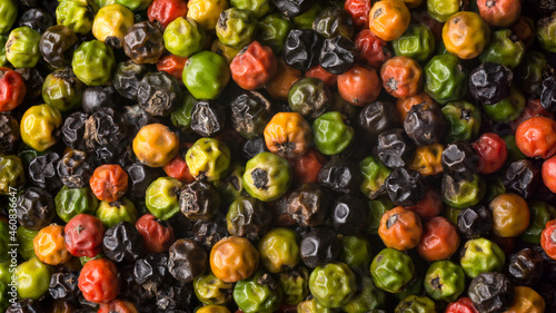 Obraz na plátně semi dried black peppercorns, drying process of spicy and seasoning ingredient c