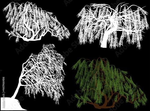Slika na platnu four weeping willows on black