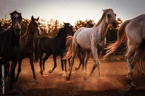 Fotografiet herd of horses on the field