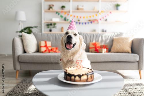 Fotografie, Obraz Golden retriever in festive hat having birthday, sitting in front of b-day cake