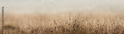Fotografie, Obraz Long grass up close in English meadow with diffused background