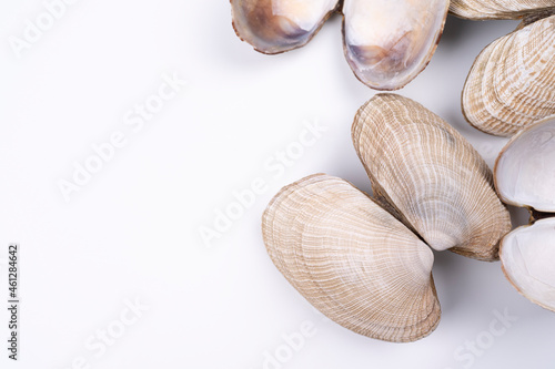 Tela Sea shells on white background, arranged on bottom right corner, with copy space