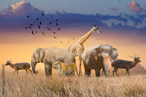 Fotografie, Obraz World Wildlife Day  Groups of wild beasts were gathered in large herds in the open field in the evening when the golden sun was shining