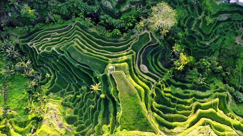 Fotografie, Obraz Aerial view of rice terraces
