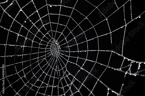 spider web with dew drops Fototapet