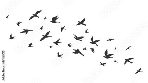 Obraz na plátně Flying bird