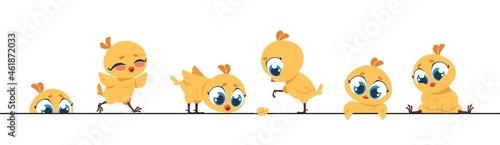 Fotografering Cute chicken border
