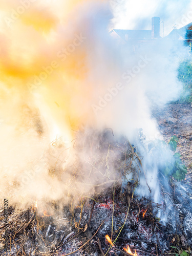 yellow smoke over burning wet cut twigs and stems of plant on home garden in aut Fototapeta