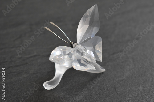 farfalla Fototapeta