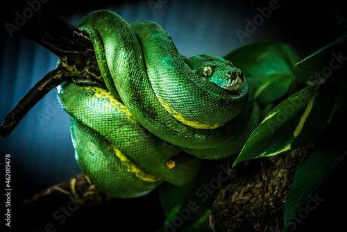 Fotografija snake on a branch. Exotic Reptile