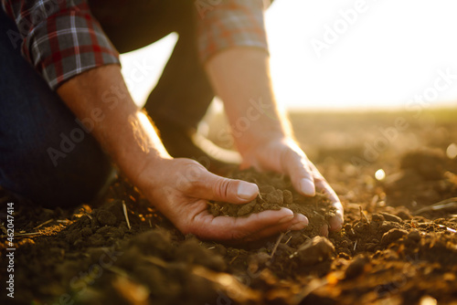 Fotografie, Obraz Expert hand of farmer checking soil health before growth a seed of vegetable or plant seedling