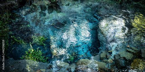 Fotografie, Obraz 大分県由布市の男池湧水の風景