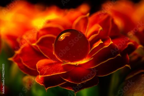 Kwiaty Kalanchoe dekoracja
