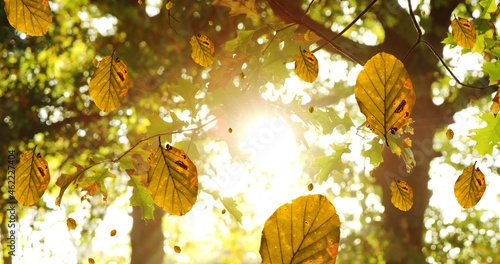 Digital composition of multiple autumn leaves falling against sun shining through trees