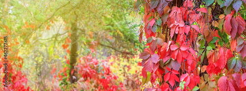 Tela Autumn landscape, banner with blurred background - a view of the foliage of the