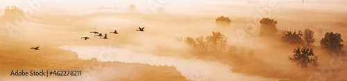 Fotografiet Autumn landscape - a flock of swans flies in the morning fog over the river vall