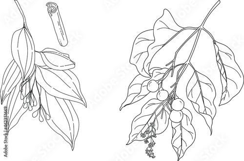 Black and white hand drawn botanical vector illustration Tapéta, Fotótapéta