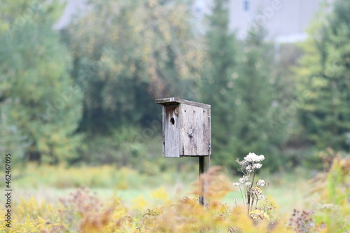 wooden birdhouse Fototapet