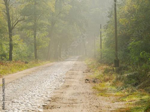 Brukowana droga w mglisty poranek.