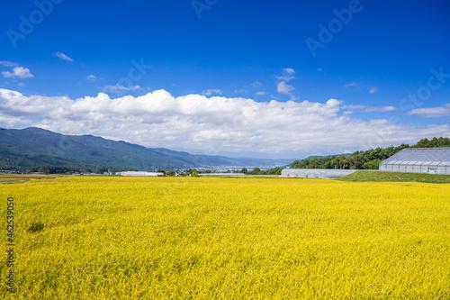 Photo 秋の田園風景から見える諏訪湖方面