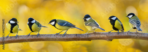 Canvas Print Group of little songbirds perching on branch of tree on autumn background