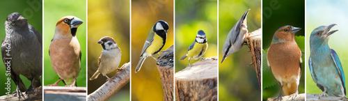 Fotografiet Collage of various birds