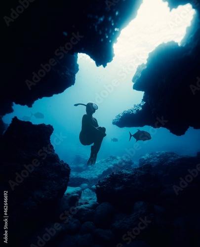 Fototapeta underwater, diver, scuba, diving, sea, ocean, water, coral, reef, fish, dive, de