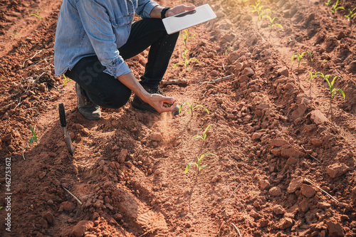 Canvastavla Expert hand of farmer checking soil health before growth a seed of vegetable or plant seedling
