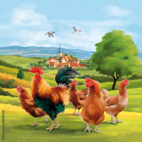 Fototapeta illustration, aquarelle, village, dessin, volait, poussin, élevage , champêtre,