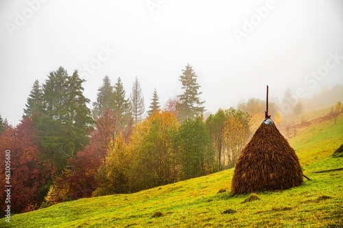 Fotografie, Obraz A large haystack stands on a green field among the dense gray fog