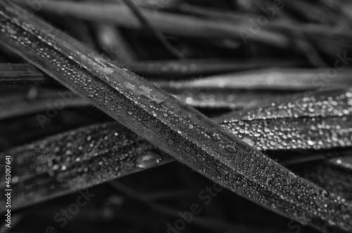 Canvastavla GRASS - Morning dew on the meadow