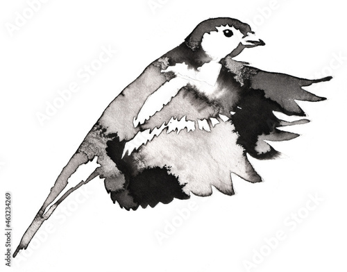 Fotografia black and white monochrome painting with water and ink draw tit bird illustratio