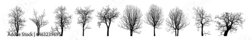 Foto Dead Tree without Leaves Vector