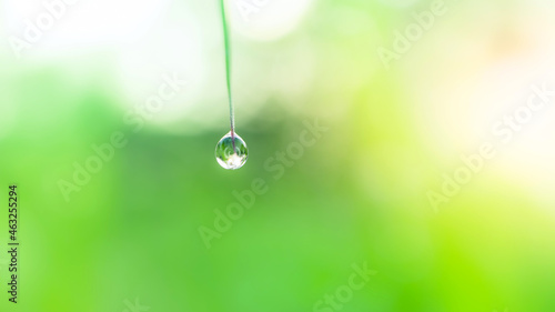 Canvastavla Fresh lush green grass with selective focusing water dew drops in morning sunris